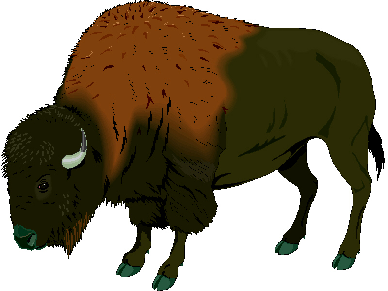 buffalo clipart cliparts co bison head clipart ndsu bison clipart