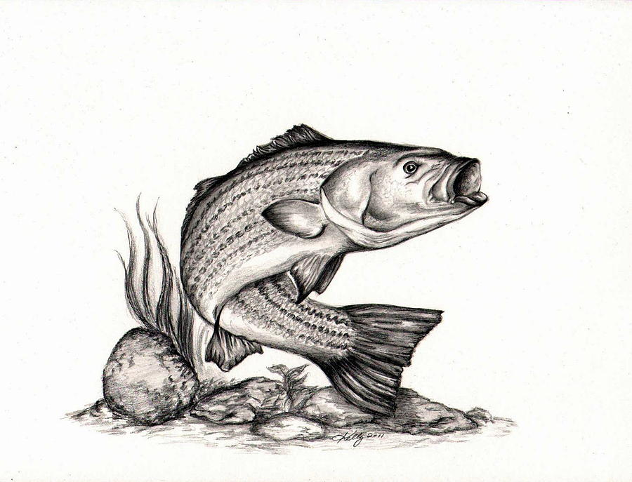 drawings of bass fish clipartsco