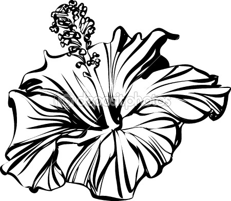 Hibiscus Flower Drawings - Cliparts.co
