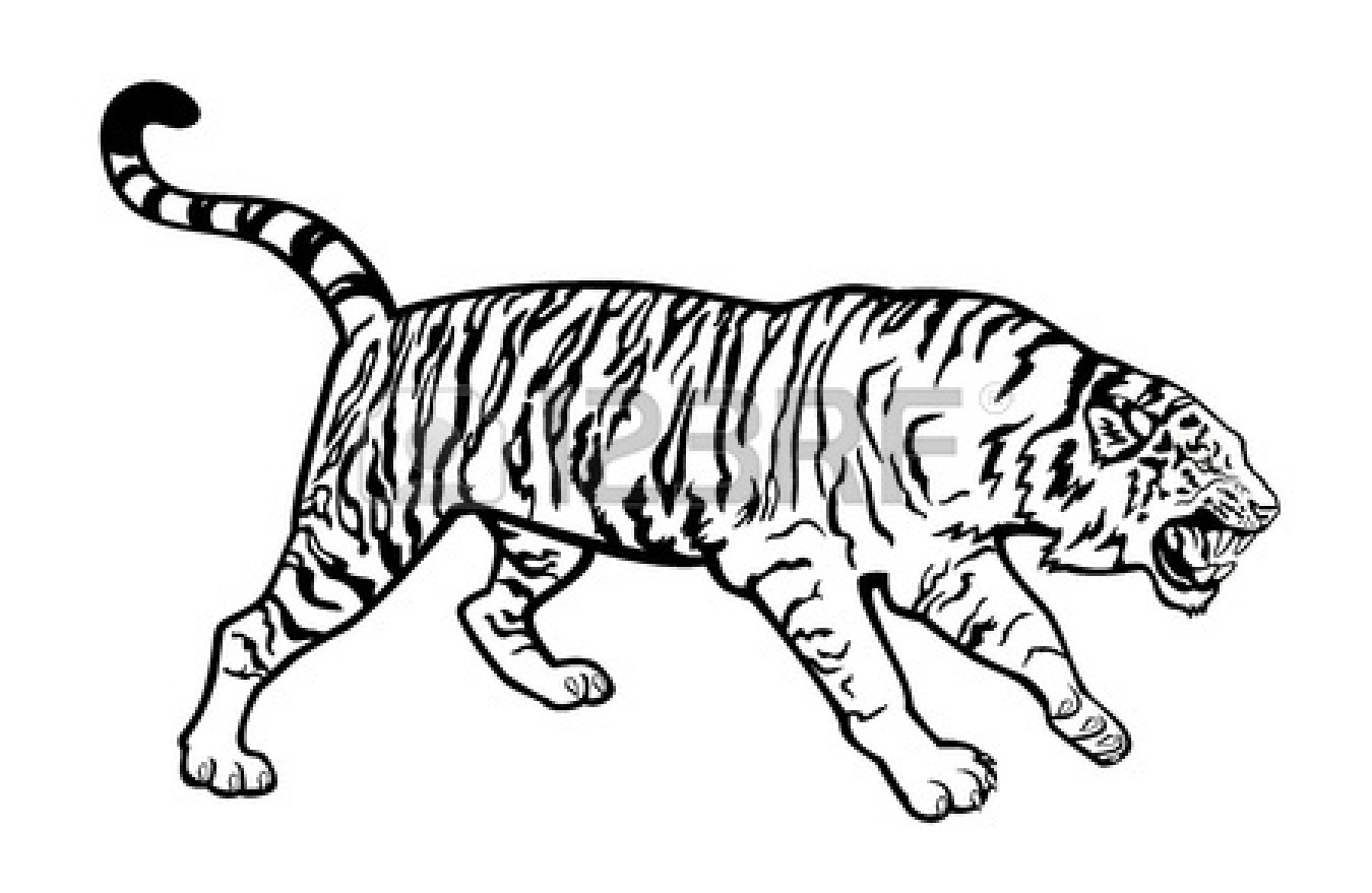 free black and white tiger clipart - photo #24