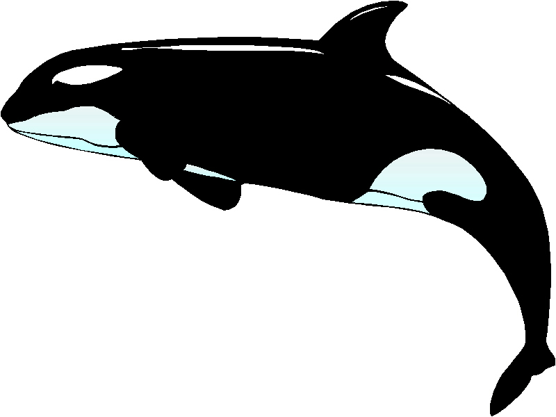 Killer Whale Clip Art - Cliparts.co
