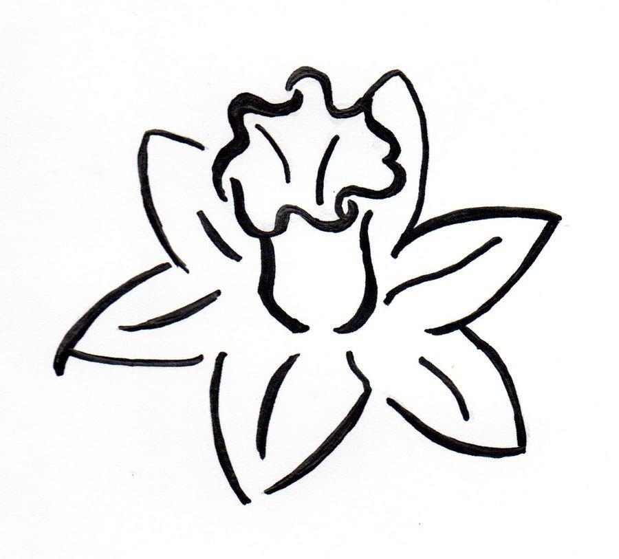 Daffodil Picture - Cliparts.co