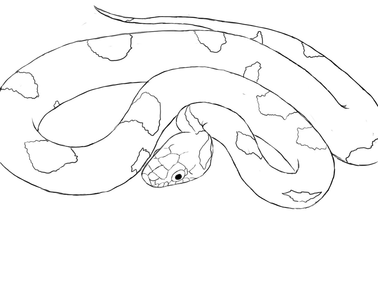Line Drawing Using Python : Snake drawing hd wallpapers in animals imagesci