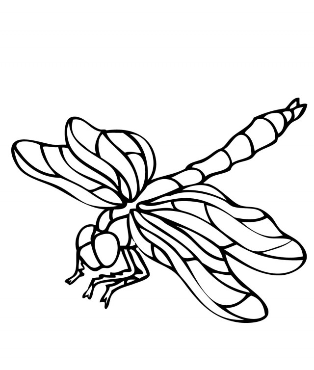 Influential image with regard to dragonfly printable