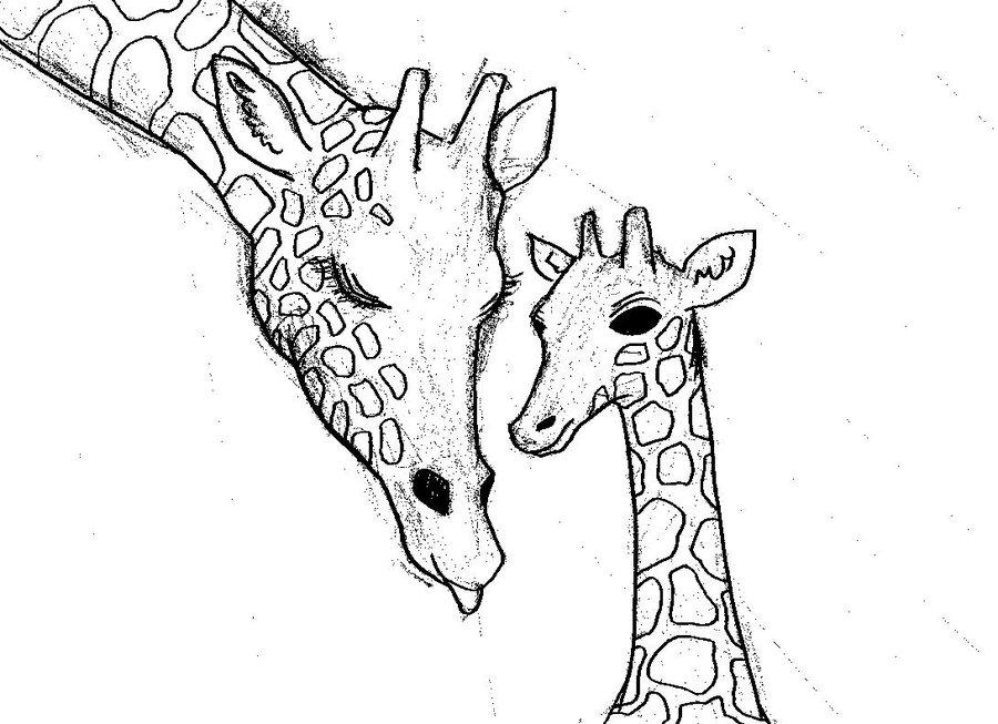 Line Art Giraffe : Giraffe line drawing cliparts