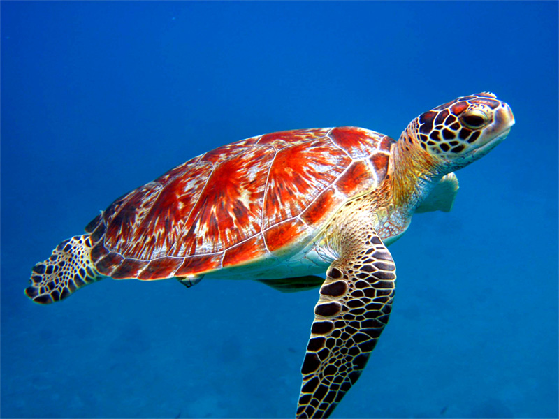 House gets bill to let state agents enforce sea turtle law | WBRZ ...
