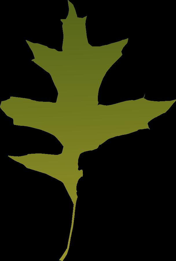 Leaf oak Green Clipart, vector clip art online, royalty free ...