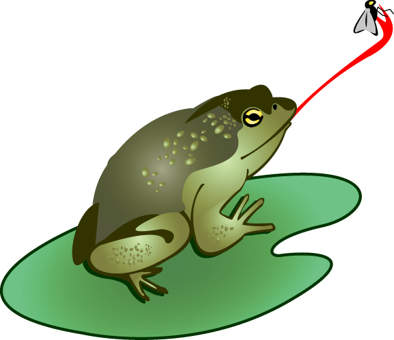 Bull Frog Catching A Fly Clip Art Download - Cliparts.co
