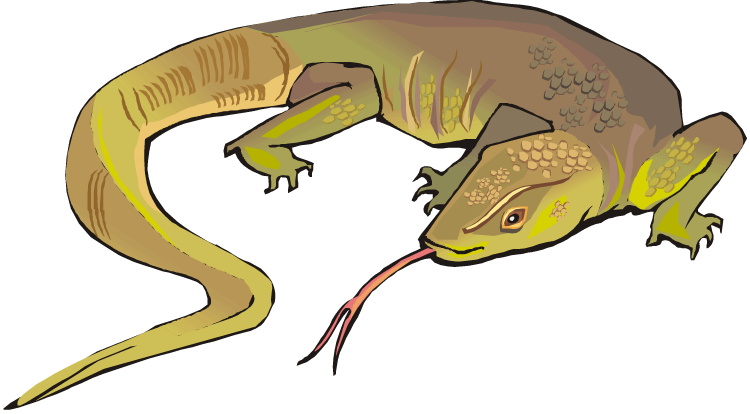 Lizard Images - Cliparts.co