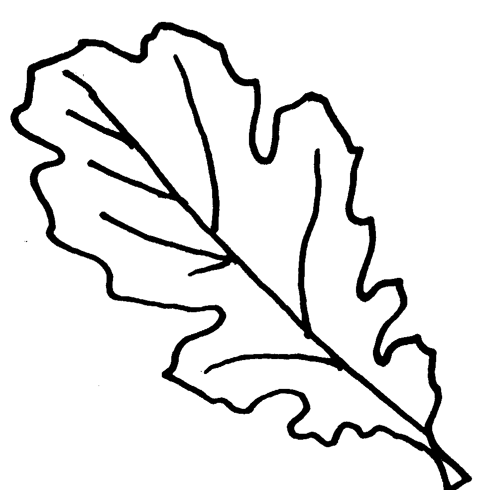 Co coloring page for leaves - Co Coloring Page For Leaves Oak Leaf Outline Cliparts Co