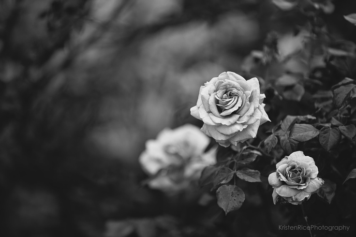 Black And White Roses - Cliparts.co