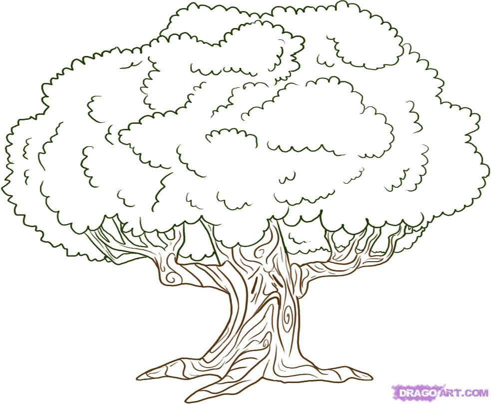 co coloring pages for adults tree simple tree drawings gallery