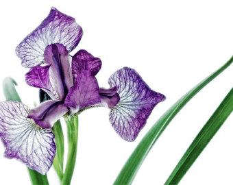 Lilac Clip Art - ClipArt Best
