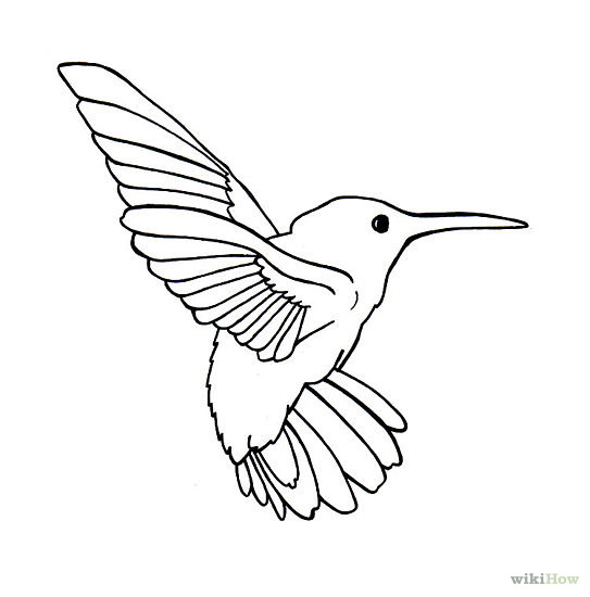 Bird Outline Drawing on Pigeon Coloring Page