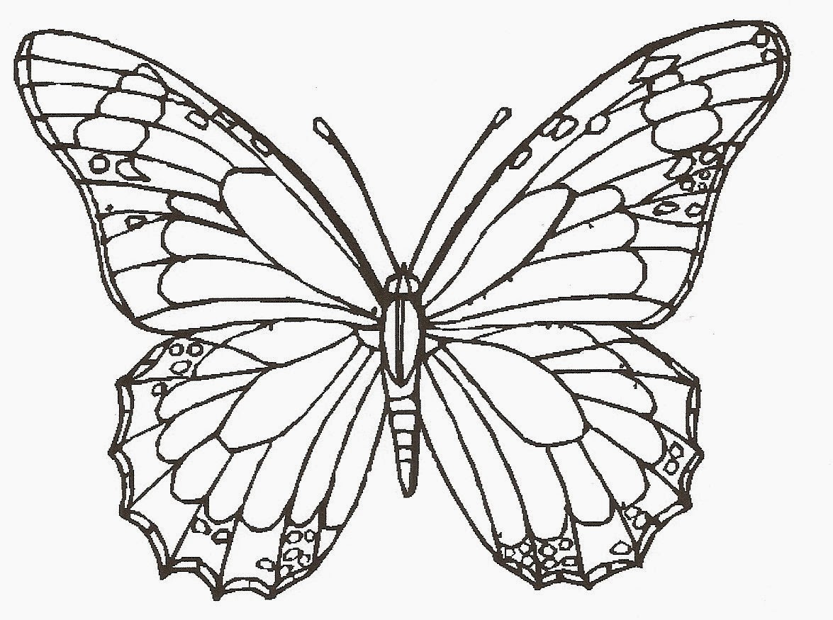 line drawings of butterflies cliparts co