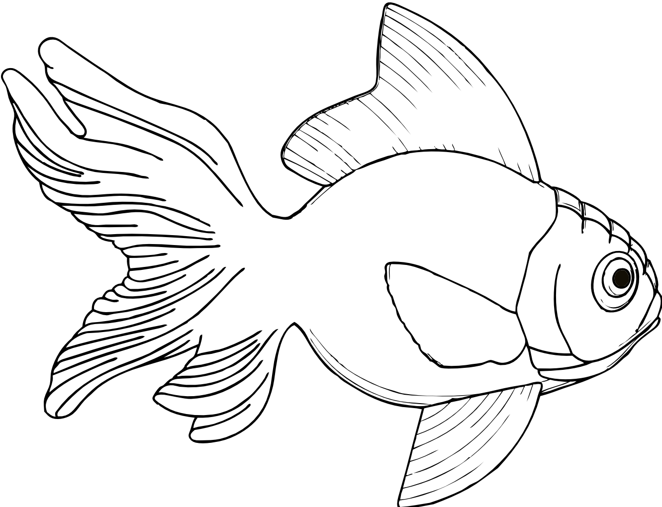 Line Art Graphics : Fish line drawings cliparts