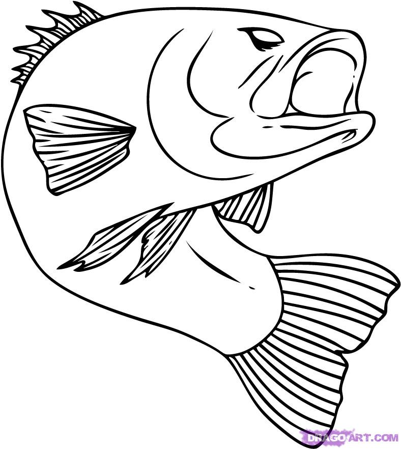 Line Drawing Of Fish : Fish line drawings cliparts