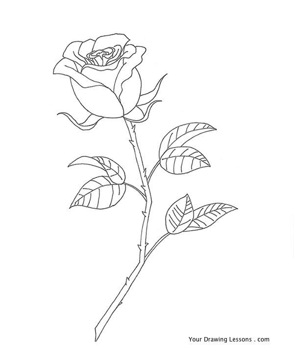 Rose Line Drawing - Cliparts.co