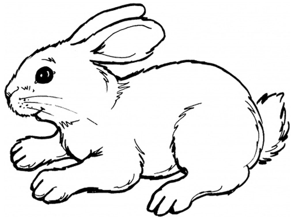 Cartoon Rabbits To Draw - ClipArt Best