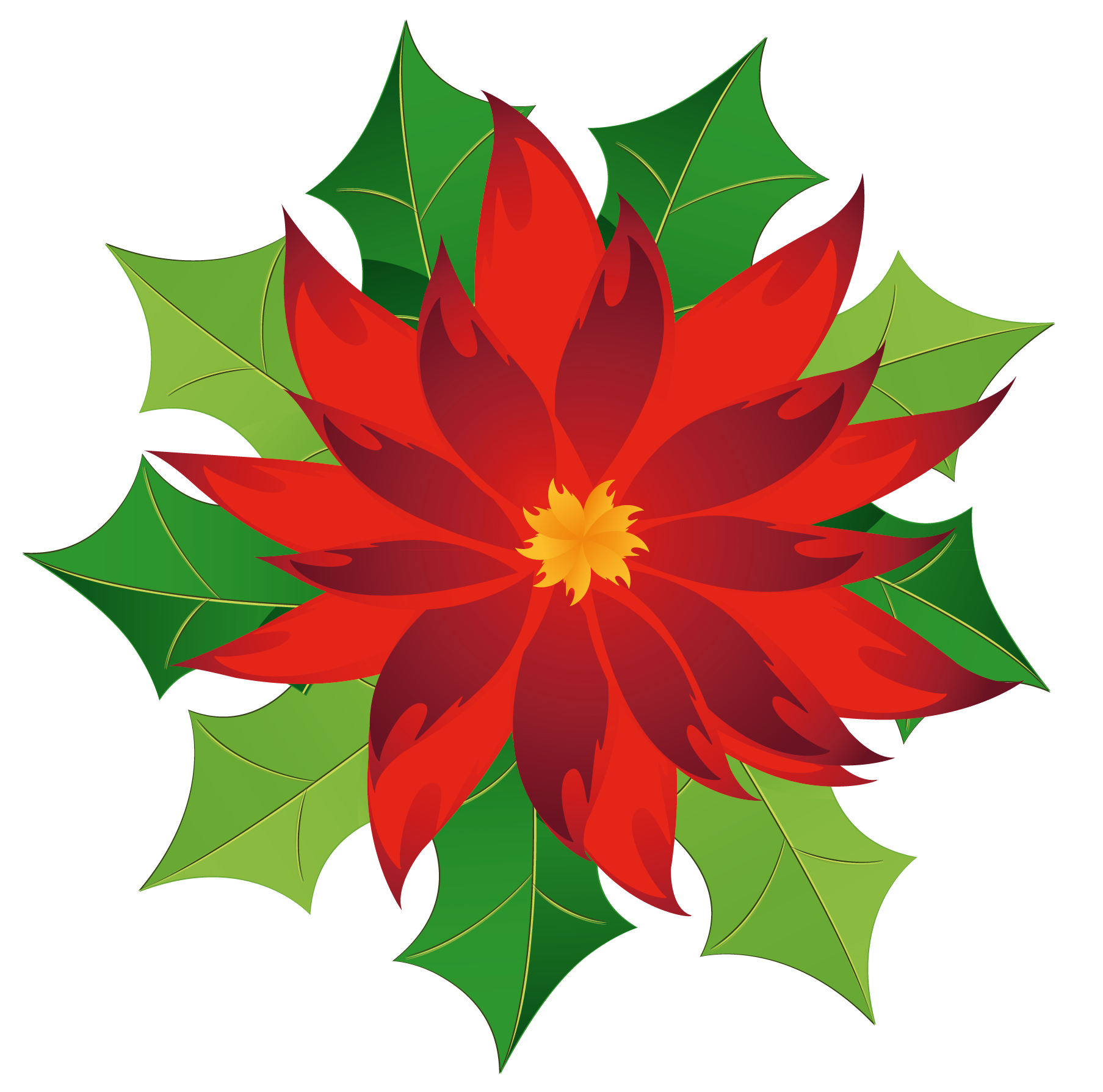 Poinsettia Pictures - Cliparts.co