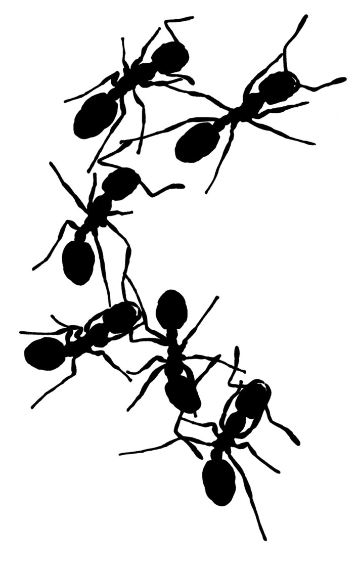 free ant clipart black and white - photo #29