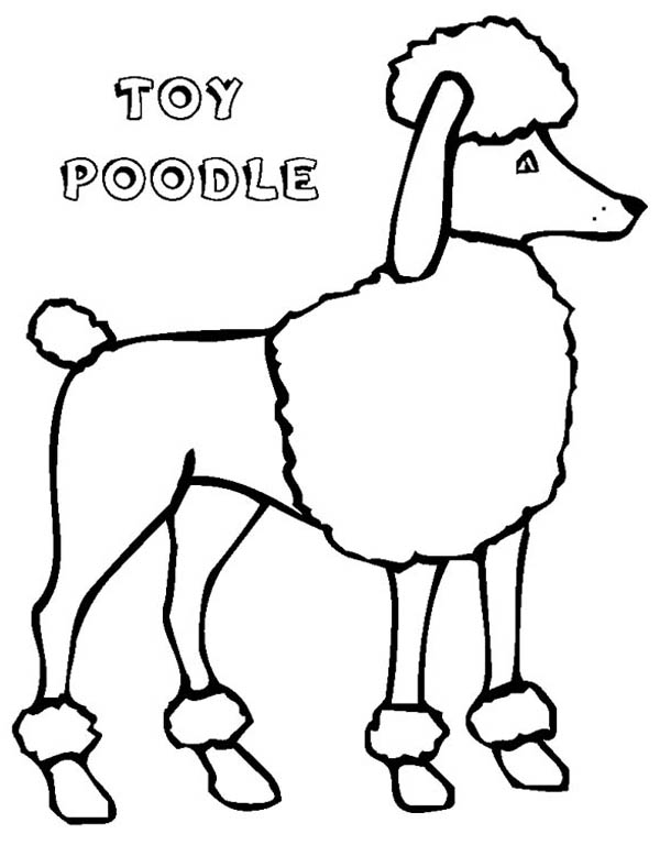 coloring pages of poodle dogs - photo#23