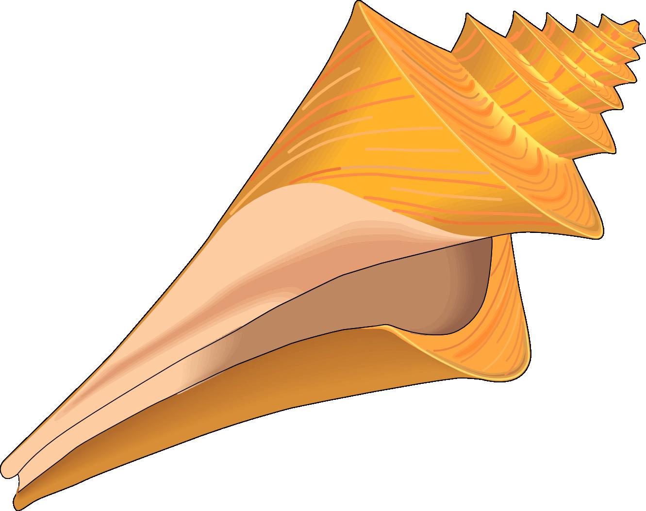 Clip Art Sea Shells - Cliparts.co