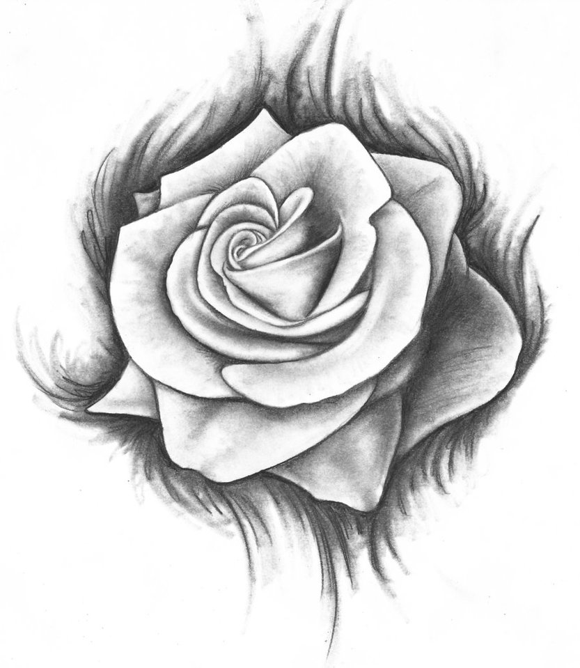 Rose Drawings - Cliparts.co