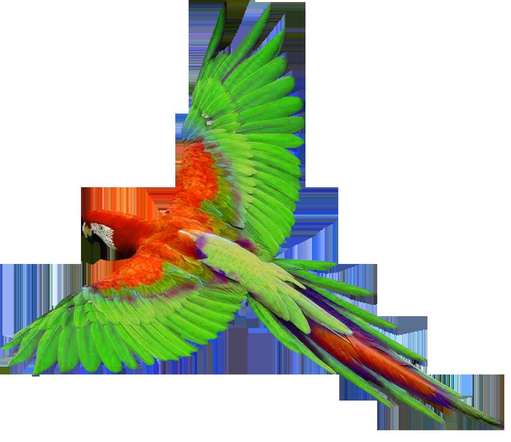 clipart parrot pictures - photo #21