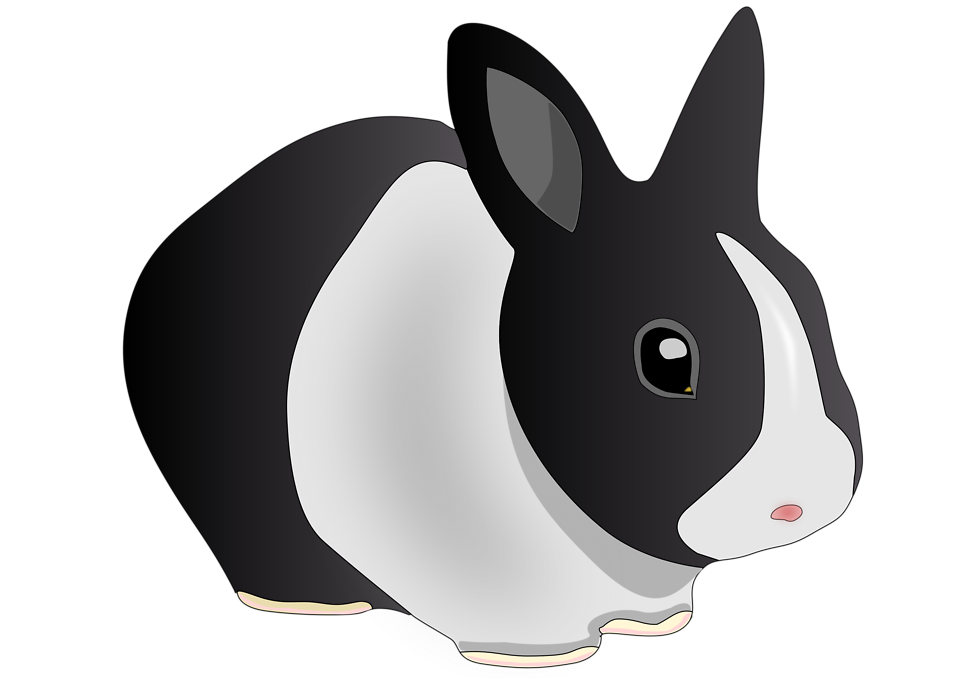 Black And White Bunny Pictures - Cliparts.co