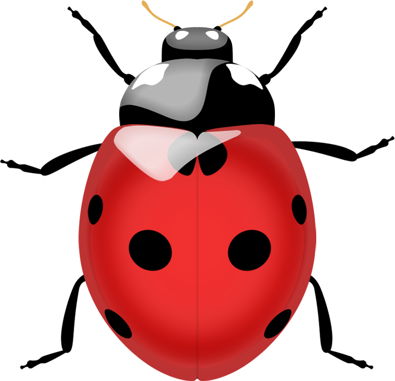 Clip Art Ladybug - Cliparts.co