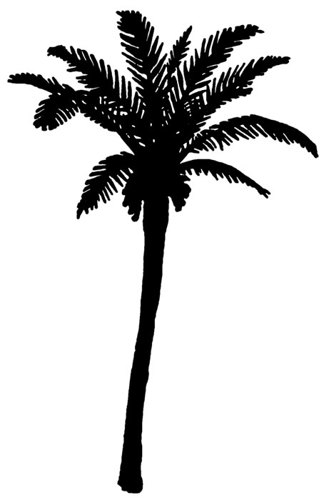 silhouette date palm tree - photo #2