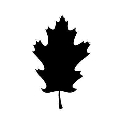 Oak Leaf Vector - Cliparts.co