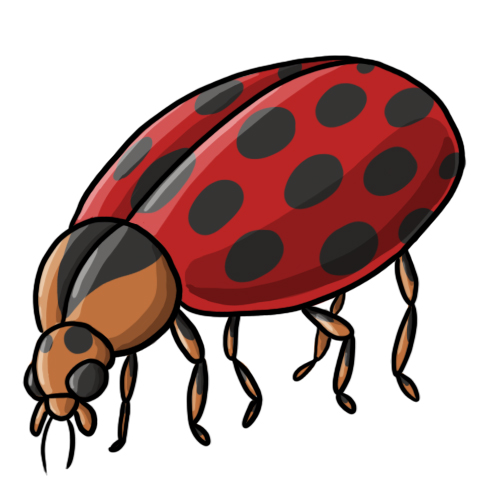 free cartoon ladybug clipart - photo #30