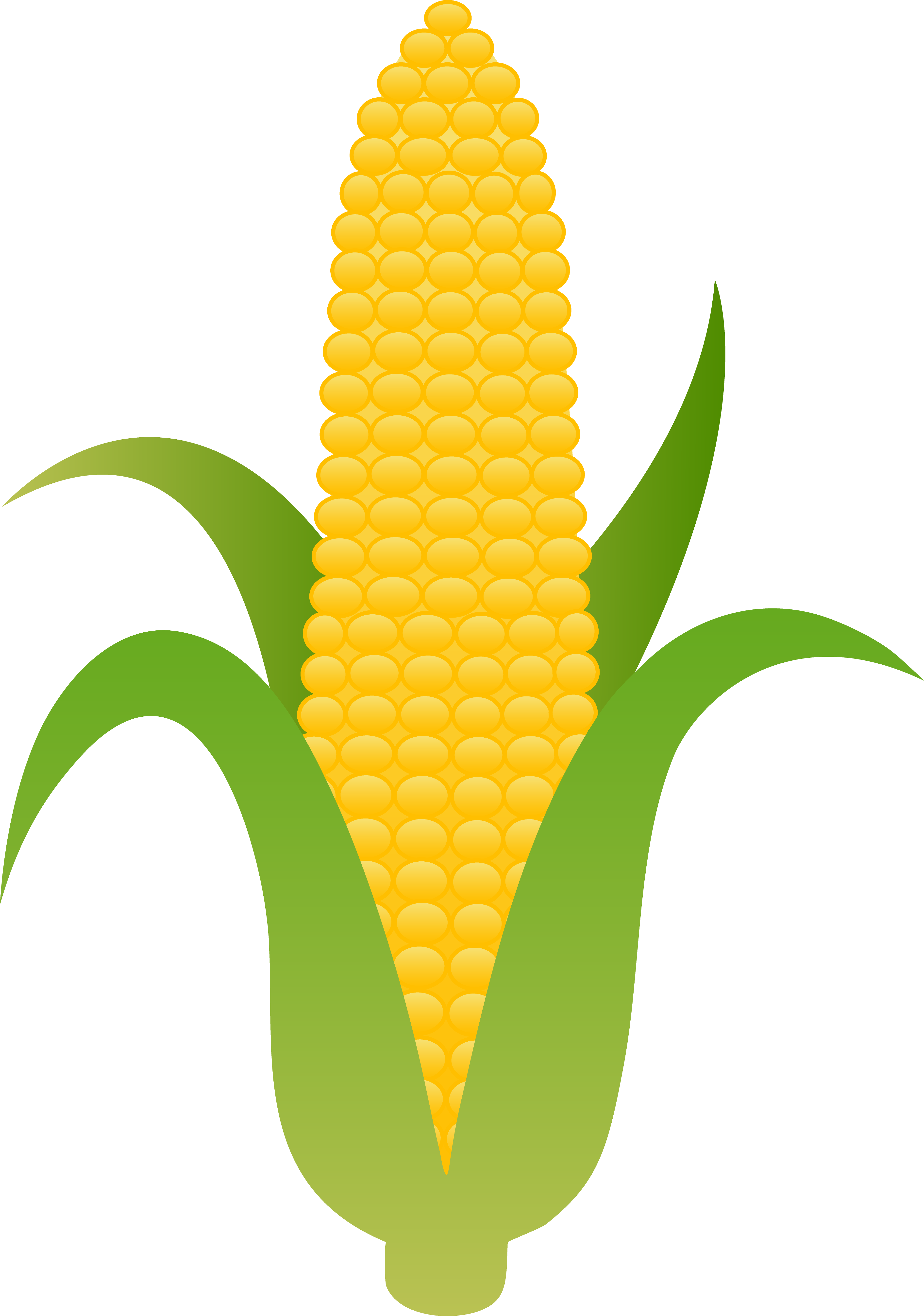 Pictures Of Corn On The Cob - Cliparts.co