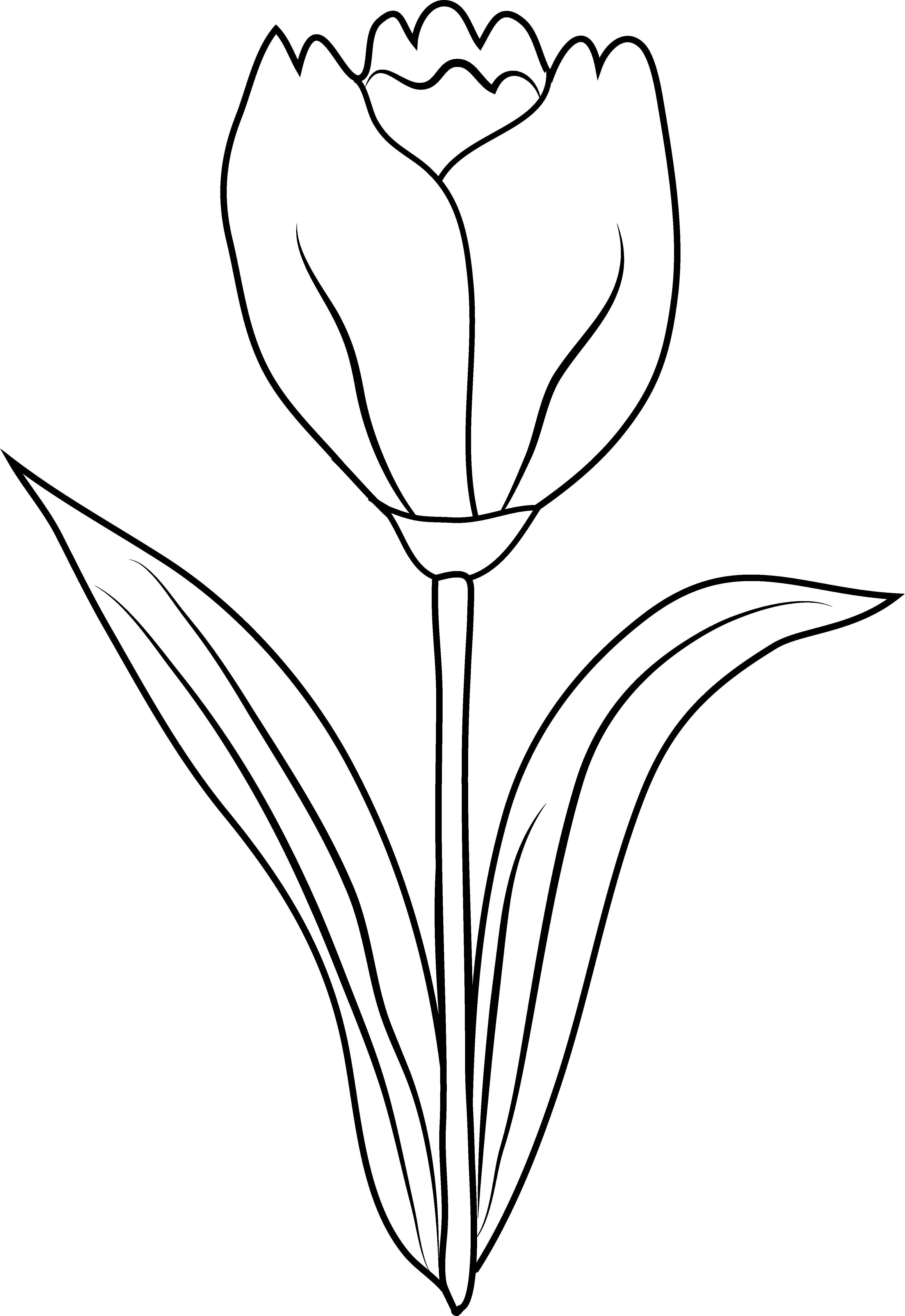 Tulip Flower Coloring Page - Free Clip Art
