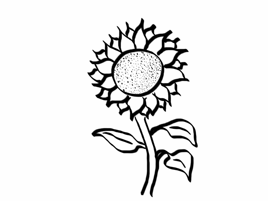 Line Drawing Sun : Sunflower line art cliparts