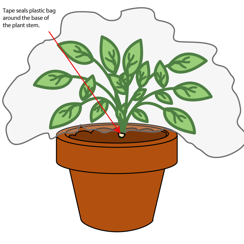plants transpiration lab Lab: whole plant transpiration lab objective the major survival challenge for terrestrial (land) plants is the loss of water to the environment through.