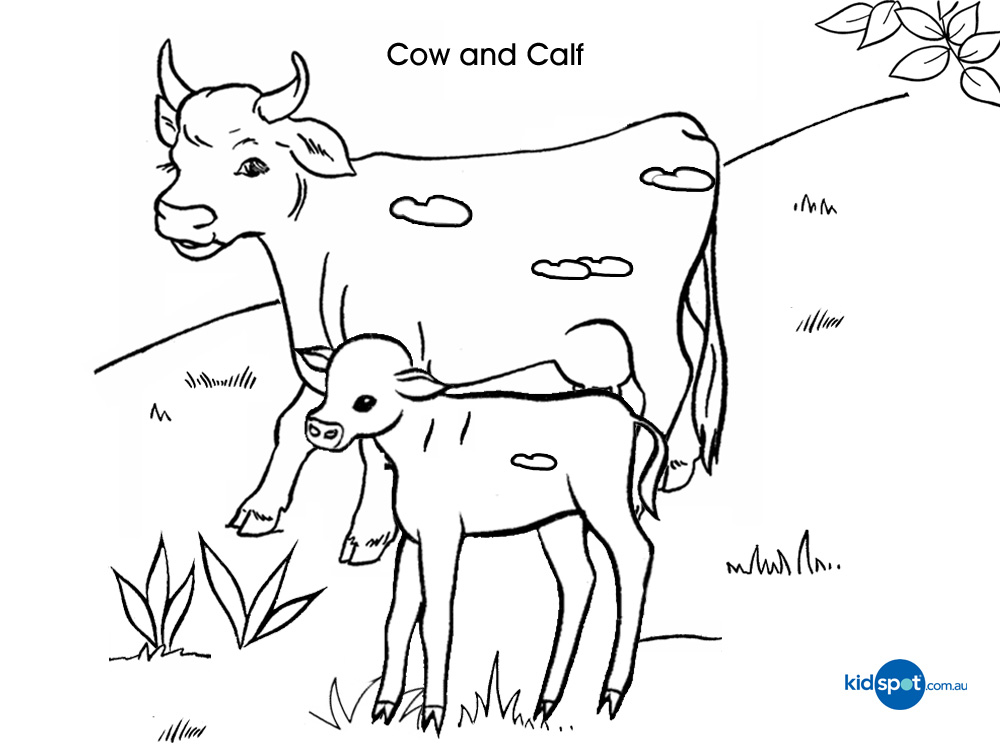 printable animal coloring pages calf | Cow Drawing For Kids - Cliparts.co