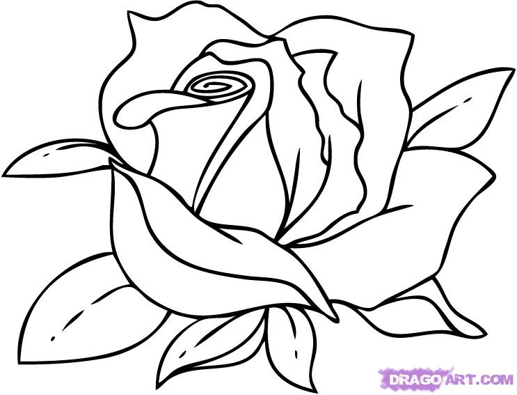 rose cartoon drawing cliparts co