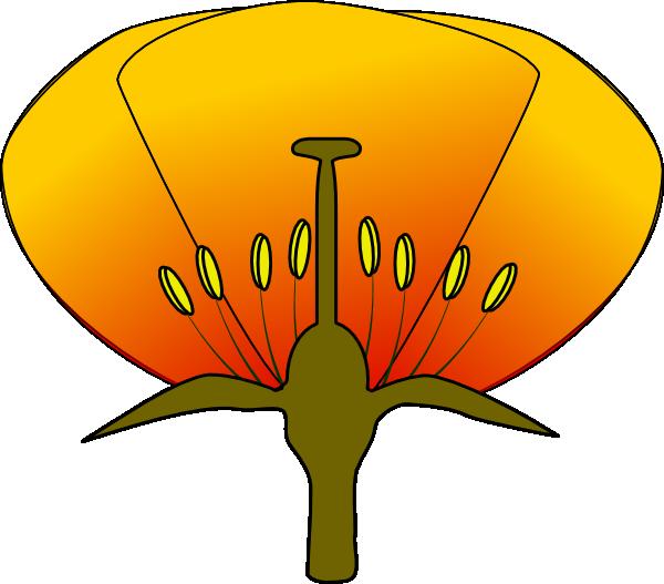 Simple flower diagram clipart simple flower diagram clipart 1 ccuart Gallery