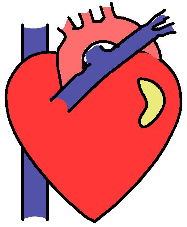 free clipart human heart - photo #18
