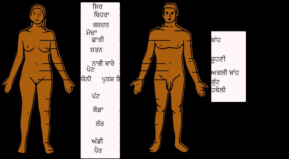File:Human Body Parts PA.svg - Wikimedia Commons