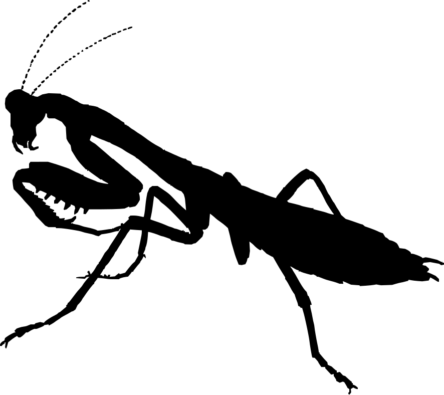 Praying Mantis Clipart Black And White Crazywidowfo