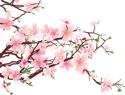 Cherry Blossom Clip Art Free - ClipArt Best