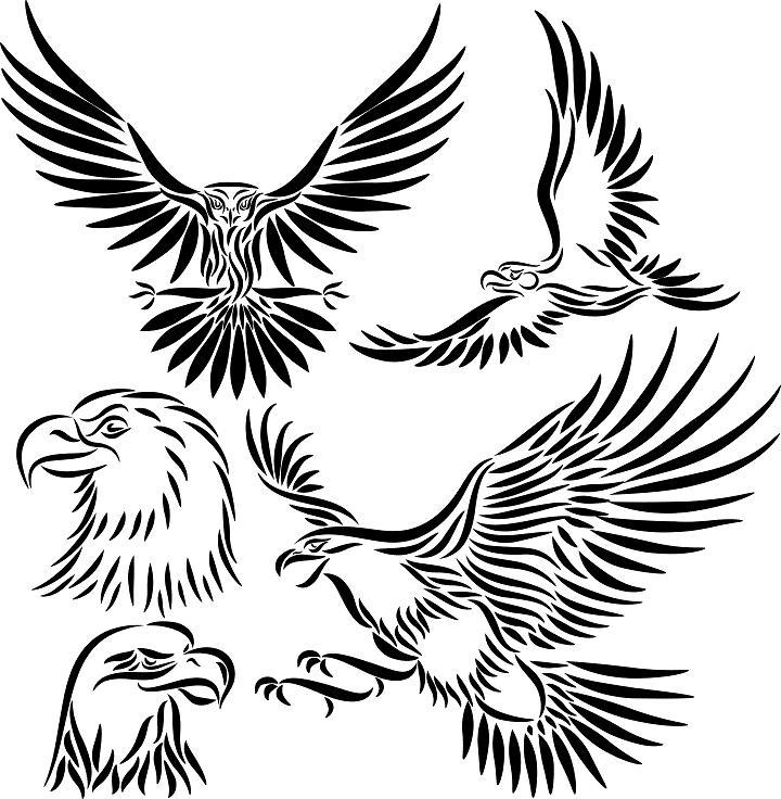 Eagle Tattoo Line Drawing : Bald eagle outline cliparts