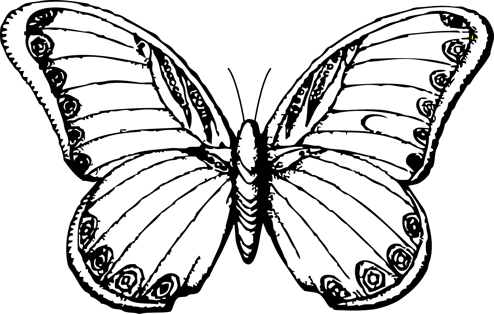 Drawing Lines Using Svg : Butterfly line art cliparts