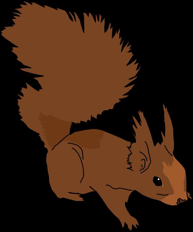 Squirrel Cartoon Images - Cliparts.co