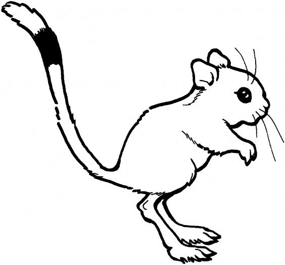 Kangaroo drawing outline - photo#24