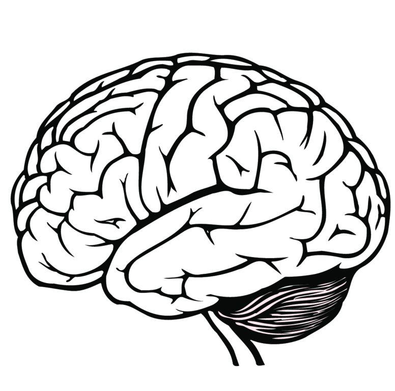 Line Drawing Cartoon : Free brain clipart cliparts